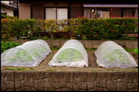 Vegetable tents