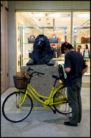 Lion and bicycle