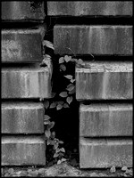 Rust and leaves BW