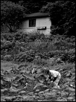 Farmer and shed BW