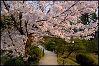 Blossoms and pathway