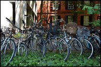 Overgrown bicycles