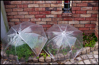 Clear umbrellas