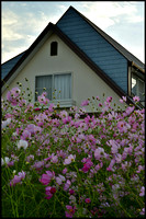 House and flowers