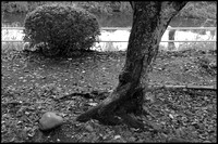 tree and rock BW