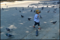 Chasing the pigeons