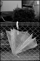 Clear umbrella B&W