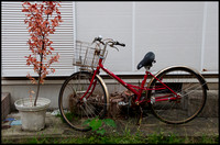Red bicycle and pot plant
