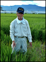 Rice farmer, hand weeding