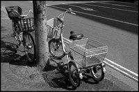 Bicycle and tricycle B&W