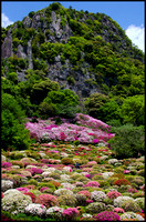 Mountain and azaleas