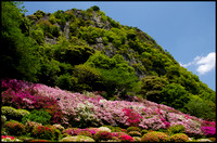 Mountain top and azaleas