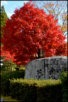 Red tree and rock