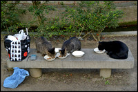 Wild cats being fed