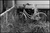 Bicycle in weeds B&W