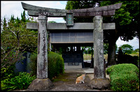 Torii and cat
