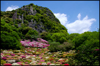 Mountain, azaleas and trees